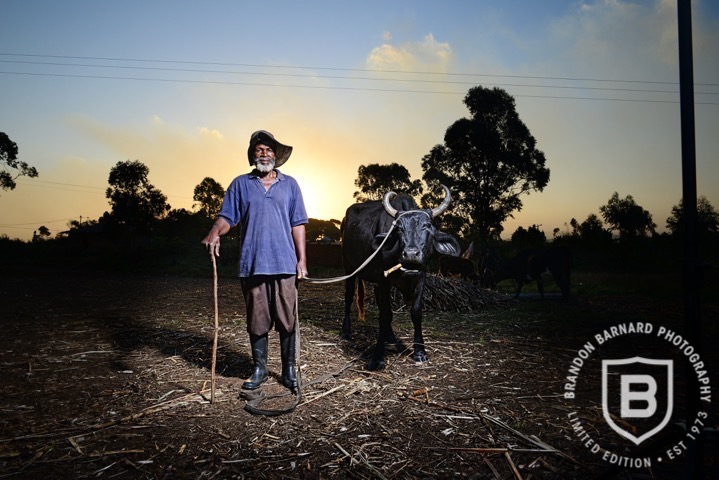 Durban Cattle Man by Brandon Barnard Professional Photographer